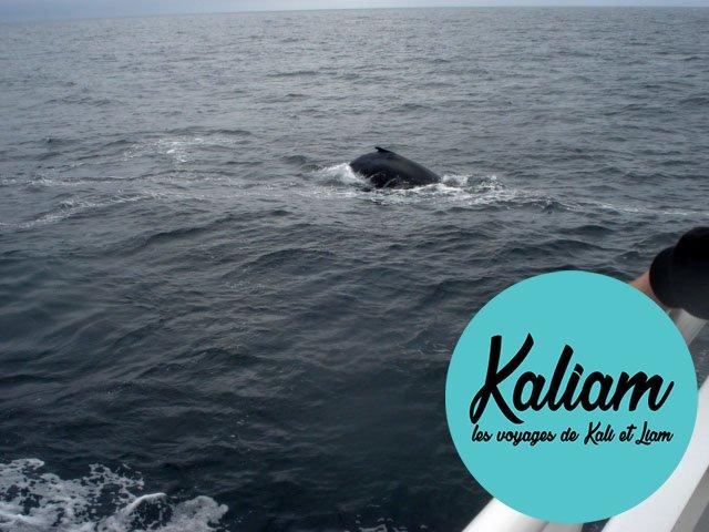 Baleine à Cape Code en amérique